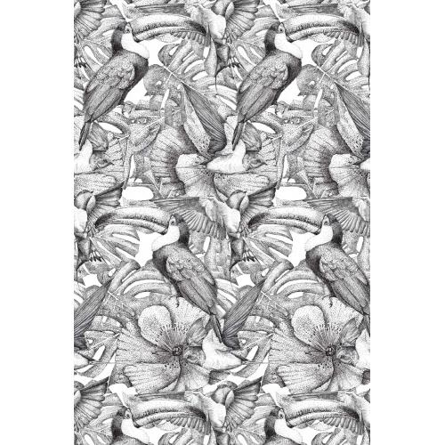 Papier peint toucan tropical noir et blanc Blomkal
